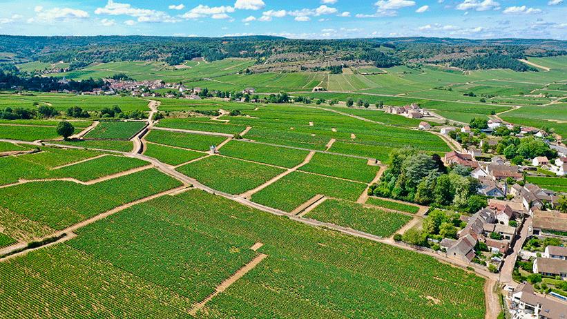 Vineyard of Domaine François Gaunoux